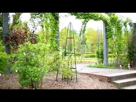 piante per fioriere fioriera per piante ricanti in giardino fai da te