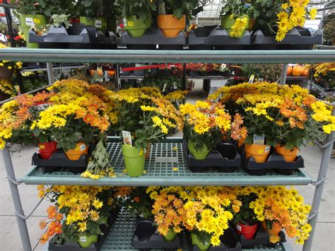 Lowes Garden Center Sales by Lowes Garden Center Mums 28 Images 25 Best Images