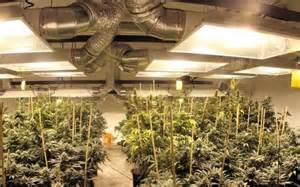 Apartment Grow Tips The 21 Best Growroom Tips And Tricks From Pros High