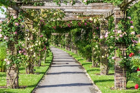 giardino botanico londra pergola in the royal botanical garden in kew