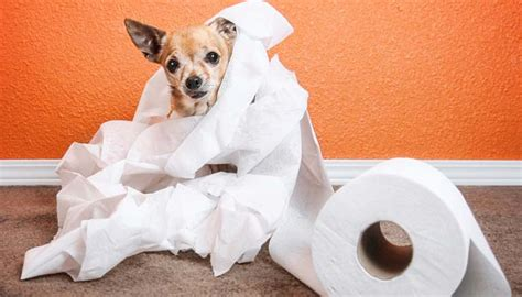 how to keep dog smell out of your house how to get dog urine smell out of carpet top dog tips