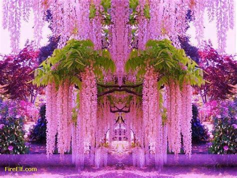 wisteria in japan wisteria tunnel japan