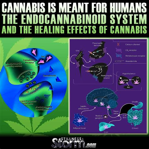 cbd hemp the secret cure of the human books attuned master energy healing reiki master