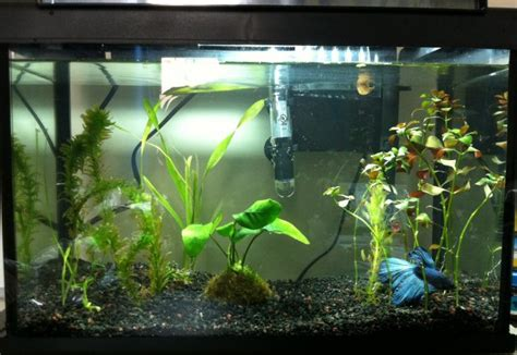 betta aquascape betta tank needs some aquascaping yall aquariacentral com