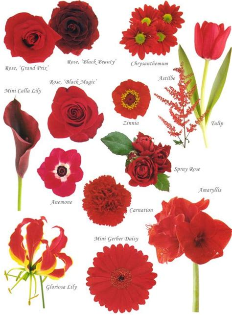 flower names by color coloring painting wedding