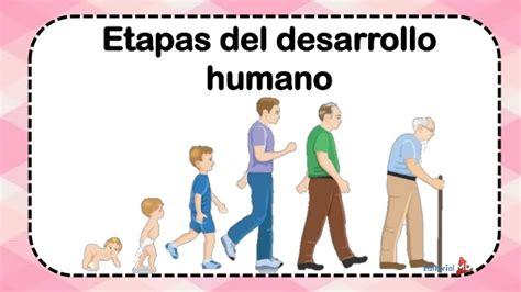 imagenes de desarrollo humano etapas de desarrollo humano
