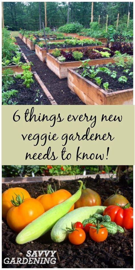 best 25 indoor vegetable gardening ideas on