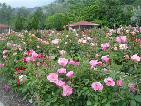 Ogden Botanical Gardens Ogden Utah Ogden Botanical Garden Photo Picture Image