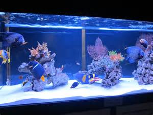 saltwater fish only tank saltwater aquarium fish tanks