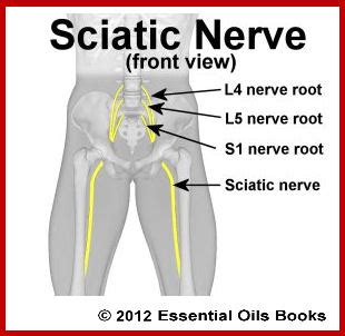 sciatic nerve location diagram s1 spine location get free image about wiring diagram