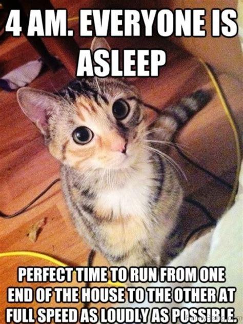 Cutest Memes - cat