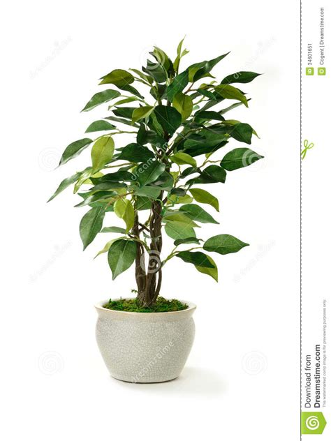 artificial tree uses artificial tree stock image image 34601651