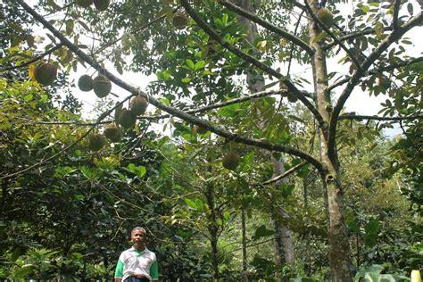 belajar konservasi hutan  mata air  wonosalam