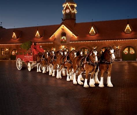 budweiser clydesdale christmas commercials