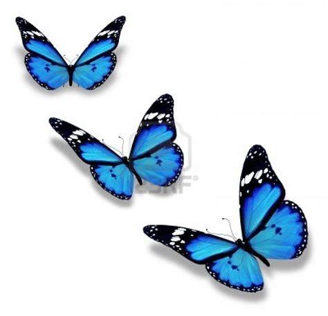 imagenes de mariposas azules animadas imagenes con mariposas miexsistir
