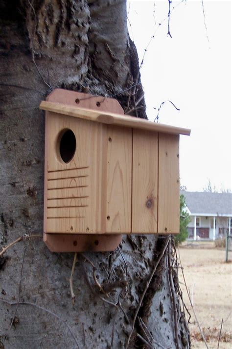 27 best images about squirrel house on pinterest a tree