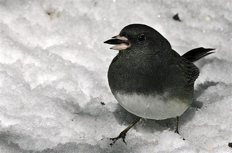 help the national audubon society count birds this