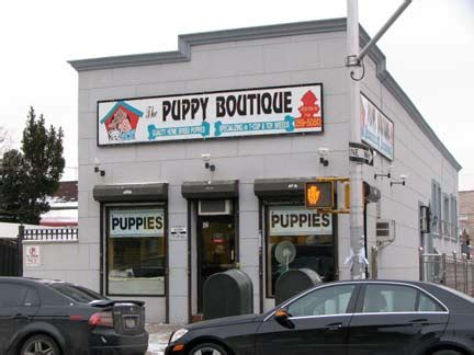 puppy boutique ny 10 puppy boutique forgotten new york