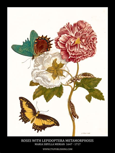 Flowers In November roses and lepidoptera metamorphosis image by maria sibylla