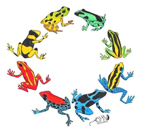 frog tattoo bali poison dart frogs bali toy ideas pinterest canada