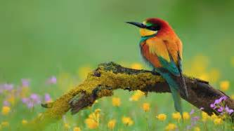flowers colorful birds photography