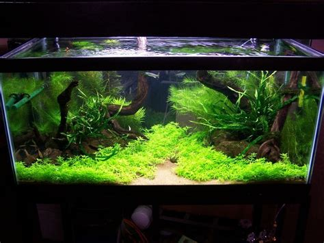 Simple Aquascaping Ideas by 25 Best Ideas About Freshwater Aquarium On