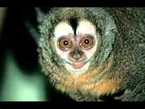 fotos animales nocturnos animales nocturnos wmv youtube