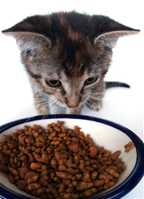 what is the best cat food and how to choose petful