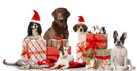 christmas gifts for your pet 2017 petmoneysaver