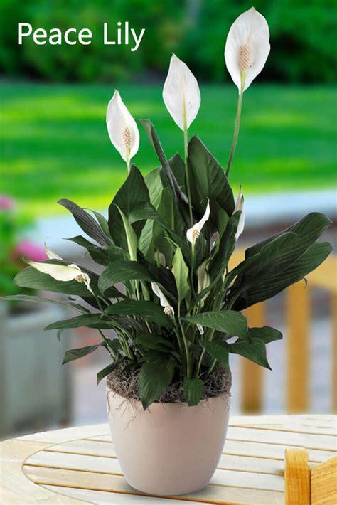 plants  grows  shade  sunlight  home home gardeners