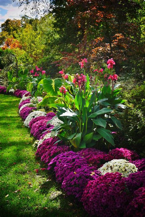 Most Beautiful Garden Flowers Best 20 Canna Ideas On