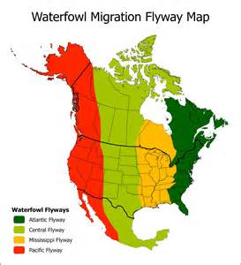 waterfowl migration map canada goose migration flyways