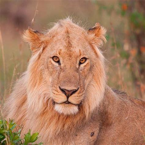 imagenes variadas de animales fotos de animales fotonesanimales twitter