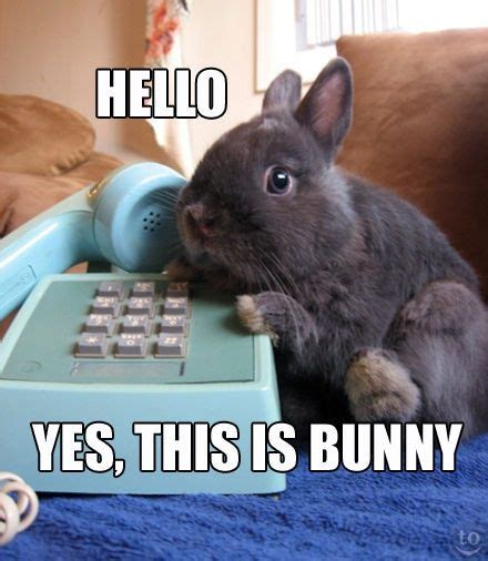 Funny Bunny Memes - 63 best bunny memes images on pinterest pets adorable