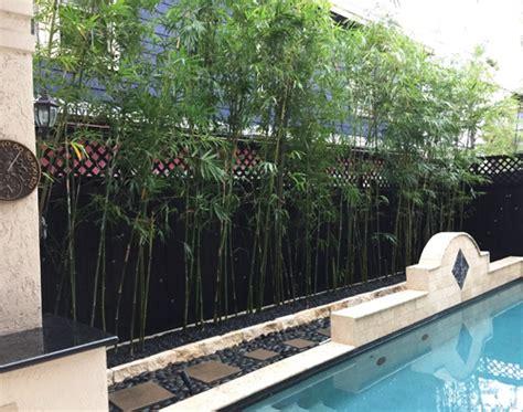 Bamboo Garden Houston houston bamboo nursery
