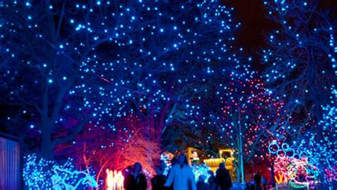 zoo lights denver zoo holiday lights zoo and