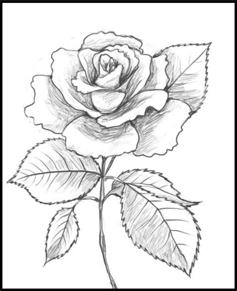 rose pattern line drawing craft 360 glass painting patterns