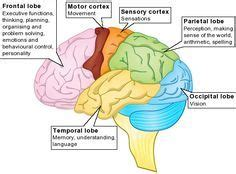 the human frontal lobes third edition functions and disorders science and practice of neuropsychology books 1000 ideas about frontal lobe damage on