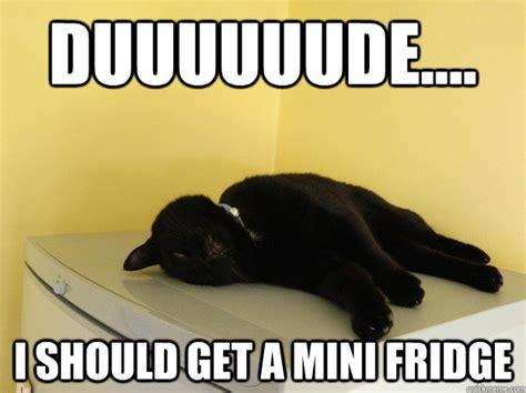 Fridge Meme - duuuuuude i should get a mini fridge stoned cat
