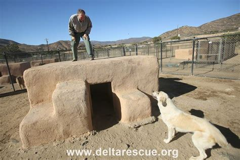 dog house sanctuary how to build a straw bale dog house delta rescue care for life animal sanctuary