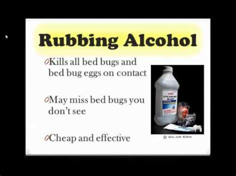 rid  bed bugs youtube