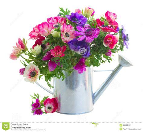 mazzo di fiori immagine mazzo di fiori dell anemone fotografia stock immagine