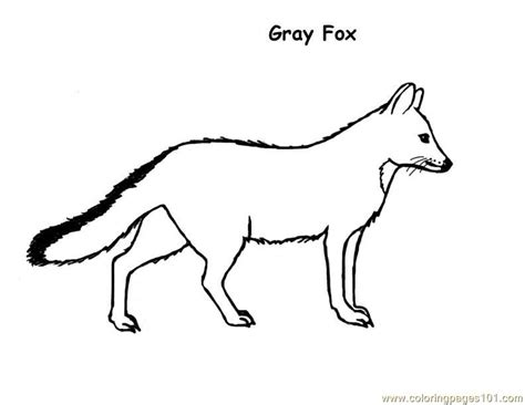 fox template free coloring pages of fox template