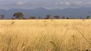 A Frame Chalet Similiar Savannah Grass Keywords