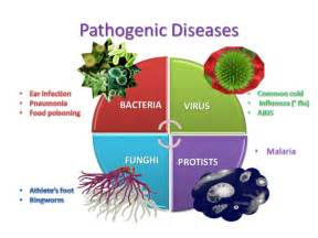 Diseases Caused By Microorganisms In Plants - science esl pathogenic diseases