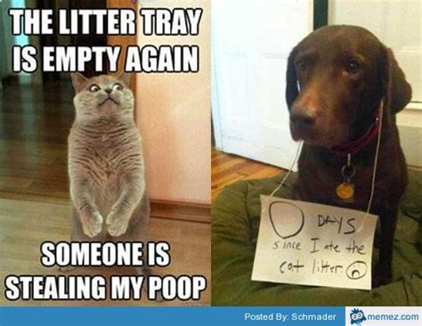 Dog Poop Meme - home memes com
