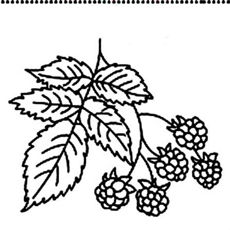 free raspberry coloring pages pictures