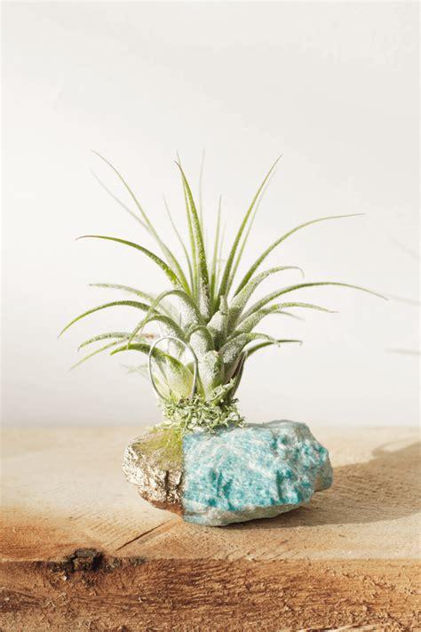 island blue amzonite crystal air plant garden plants