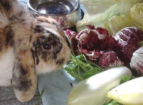 coniglio alimentazione alimentazione conigli l importanza della verdura