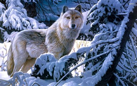 white wolf and black wolf 1600x1200 wallpapers wolf black and white wolves wallpaper